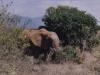 12_elefant3